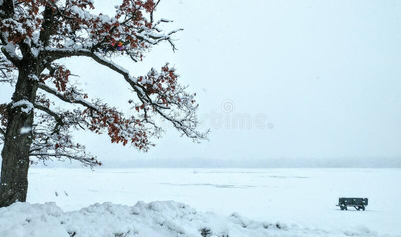 Solitude - Green Park Bench, Trees, Foggy, Snowy Lake royalty free stock images
