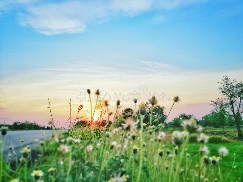 Sunsets. Sensets, sky, blue, flower, wight, whiteflower royalty free stock photography