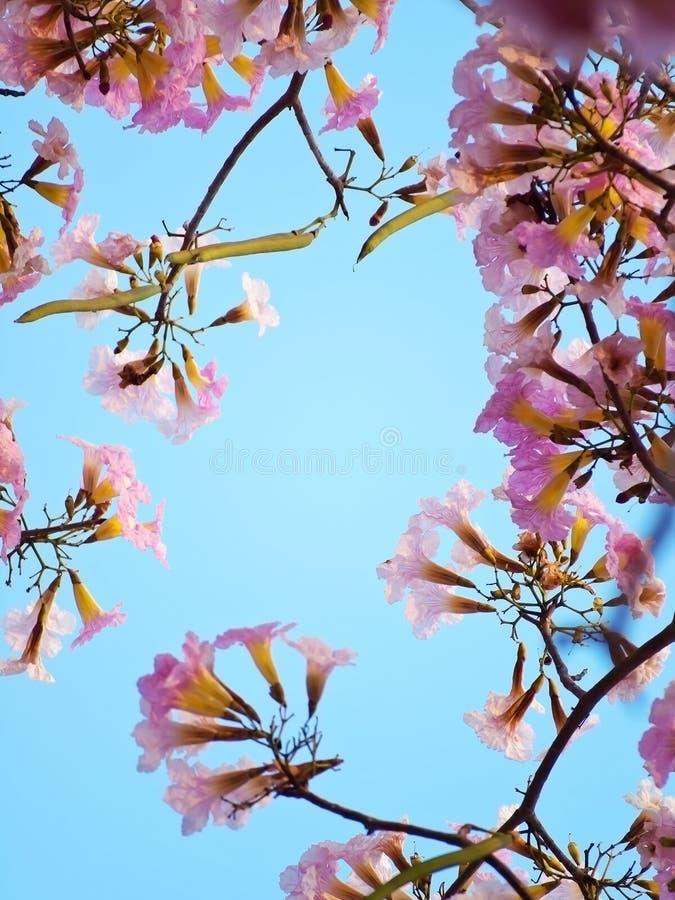 Sensibilità rosa di sogno dolce fotografia stock libera da diritti