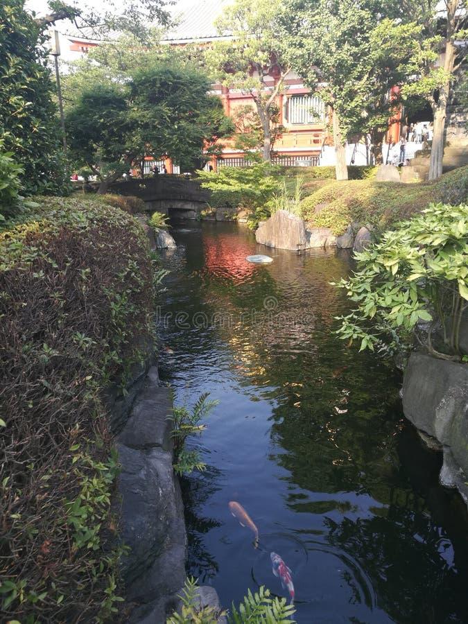 Senso ji寺庙和鲤鱼koi 库存照片