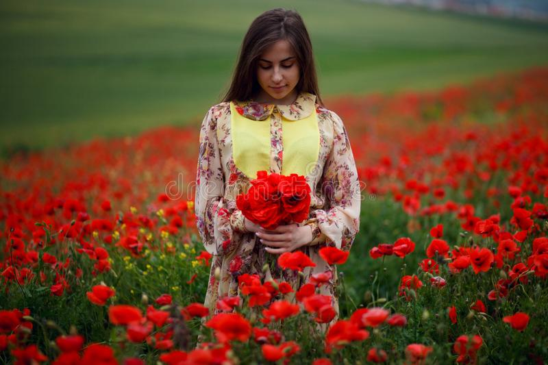 Handsome girl wearing in summer floral dress, seated in poppies field, holdings a bouquet of flowers, looks down stock photo