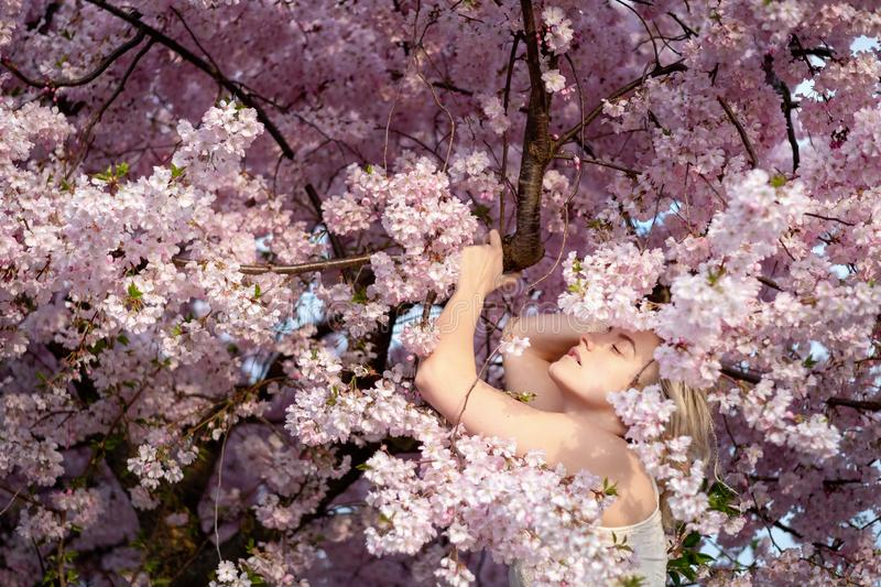 Sensual portrait of a young woman in the middle of the pink blossoms of a blossoming tree royalty free stock photo