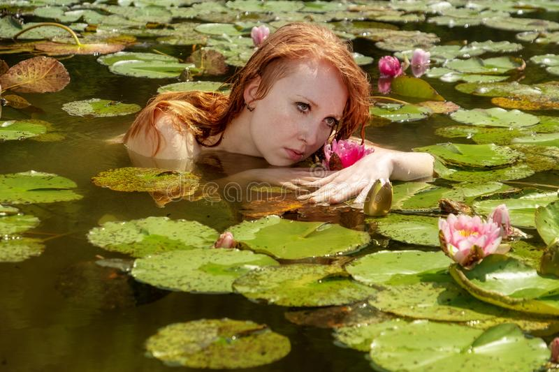 Sensual young redhead woman mermaid swims plays sensitively seductive with pink water lilies in the water stock images