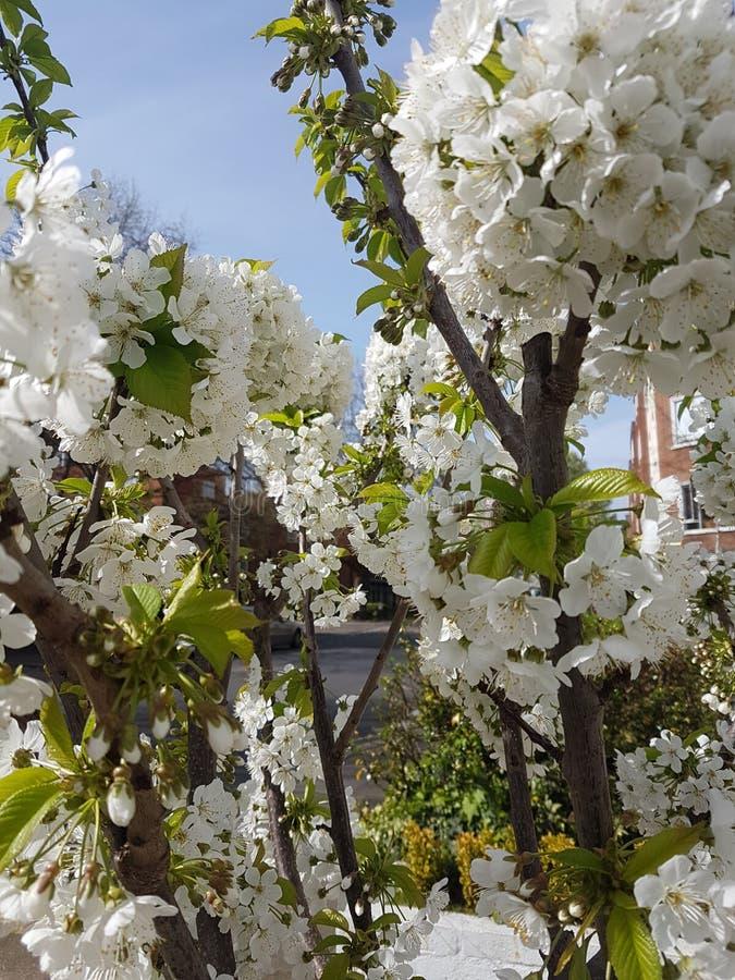 Sent blomningslut upp fotografering för bildbyråer