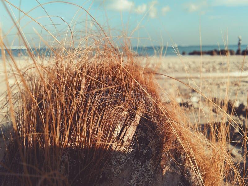 Senta libero della spiaggia della noce di cocco immagini stock
