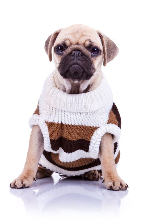 Sentada arropada del perro de perrito del barro amasado fotos de archivo