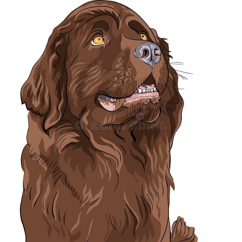 Sentada de la casta del perro de Terranova del perro del bosquejo ilustración del vector