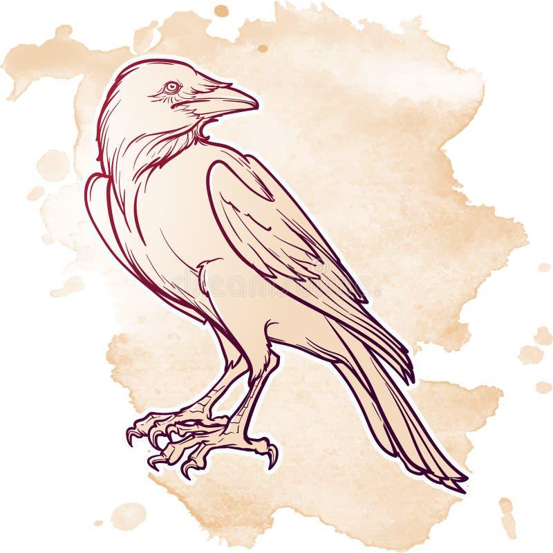 Sentada del cuervo Dibujo lineal exacto aislado en fondo del punto del grunge Elemento del diseño de Halloween ilustración del vector