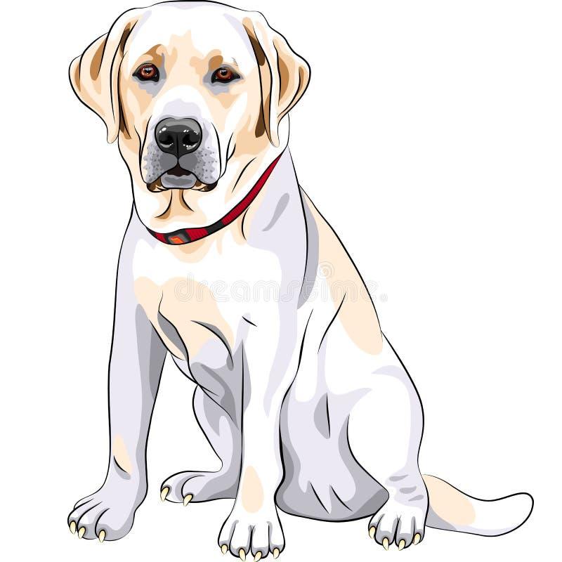 Sentada del perro perdiguero de Labrador de la casta del perro amarillo ilustración del vector