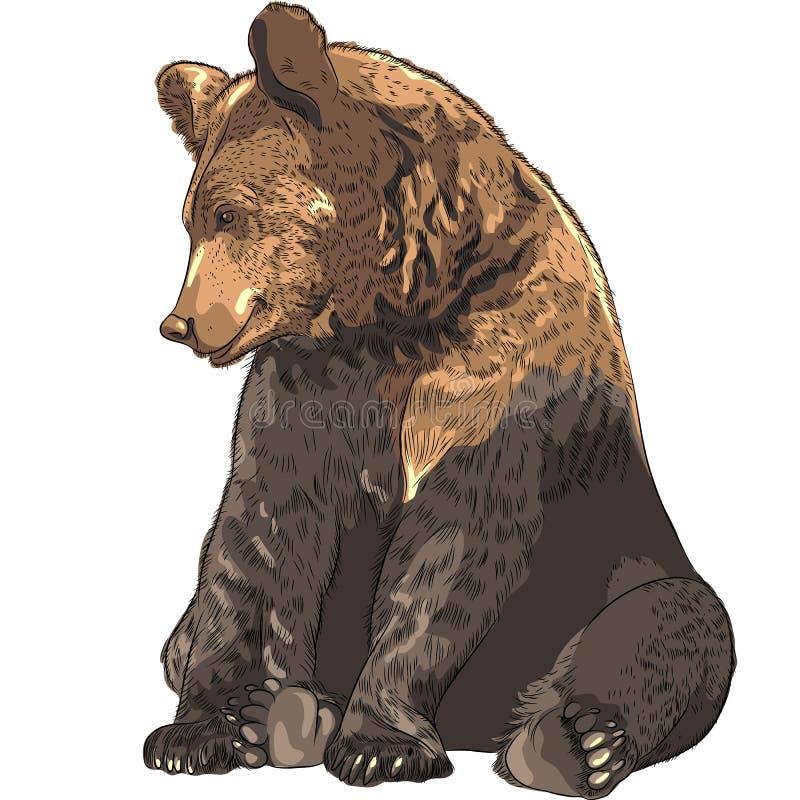 Sentada divertida del oso del vector ilustración del vector