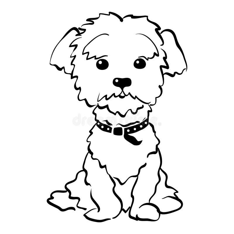 Sentada divertida del perro maltés del bosquejo del vector ilustración del vector