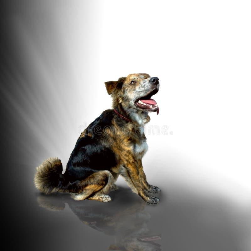 Sentada mezclada del perro de la casta foto de archivo