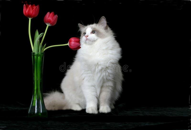 Sentez les fleurs image libre de droits