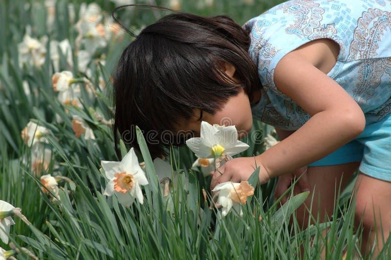 Sentez les fleurs images stock