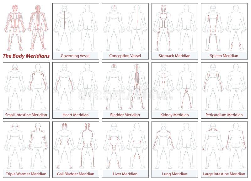 Sentido de chorro del diagrama esquemático de los meridianos del cuerpo ilustración del vector