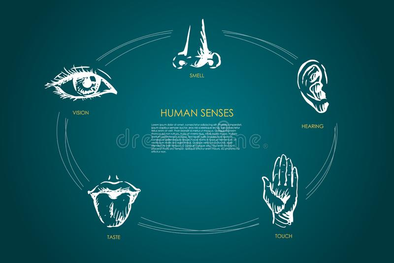 Sentidos humanos - visión, gusto, tacto, audiencia, sistema del concepto del vector del olor ilustración del vector
