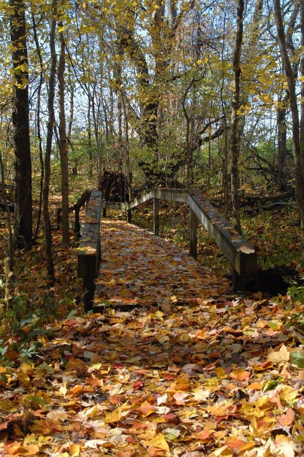 Sentier couvert de feuilles dans les bois photo libre de droits