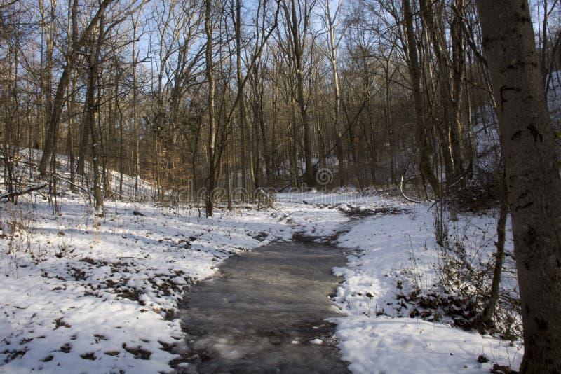 Sentier de randonnée couvert par glace dans la forêt couverte par neige photographie stock libre de droits