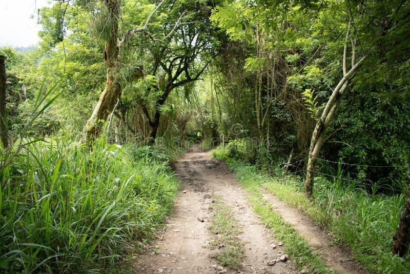 Sentier de randonnée dans la jungle de la Colombie images libres de droits
