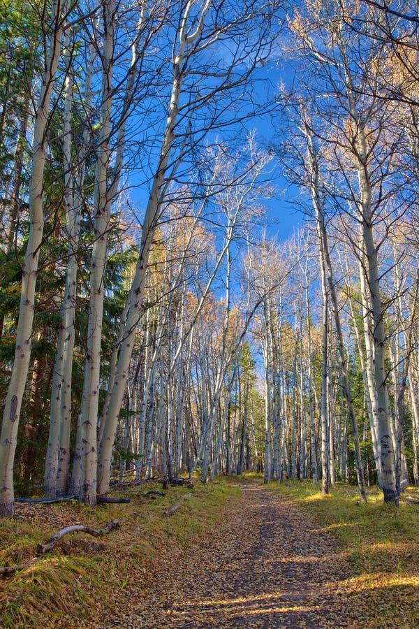 Sentier de randonnée dans la région de Kananaskis des Rocheuses canadiennes photos libres de droits