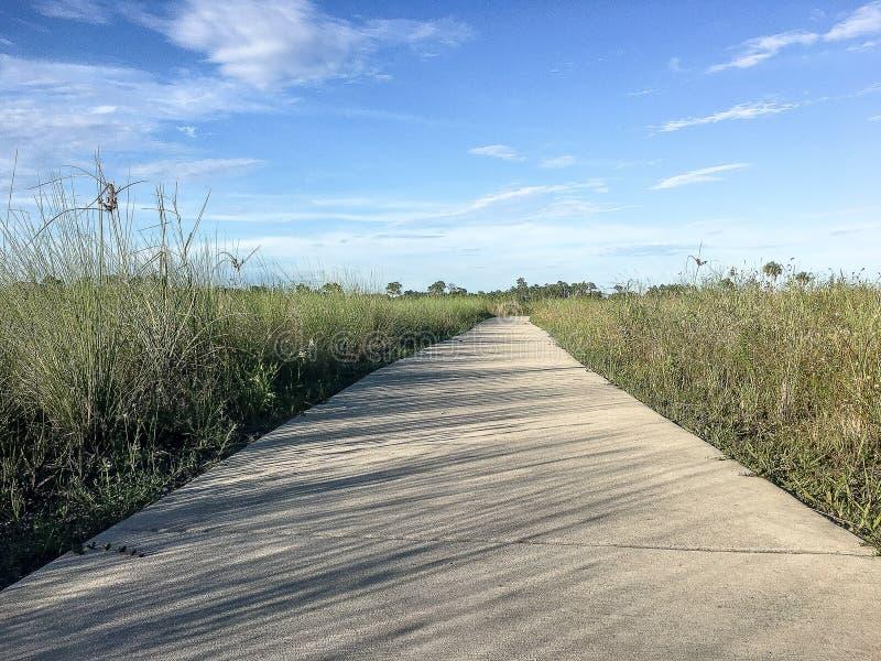 Sentier de randonnée dans les marais images stock