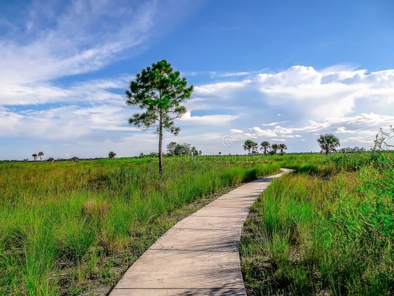 Sentier de randonnée dans les marais image stock