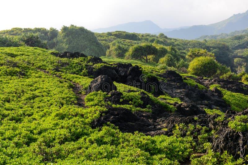 Sentier de randonnée dans Maui Hawaï photos libres de droits