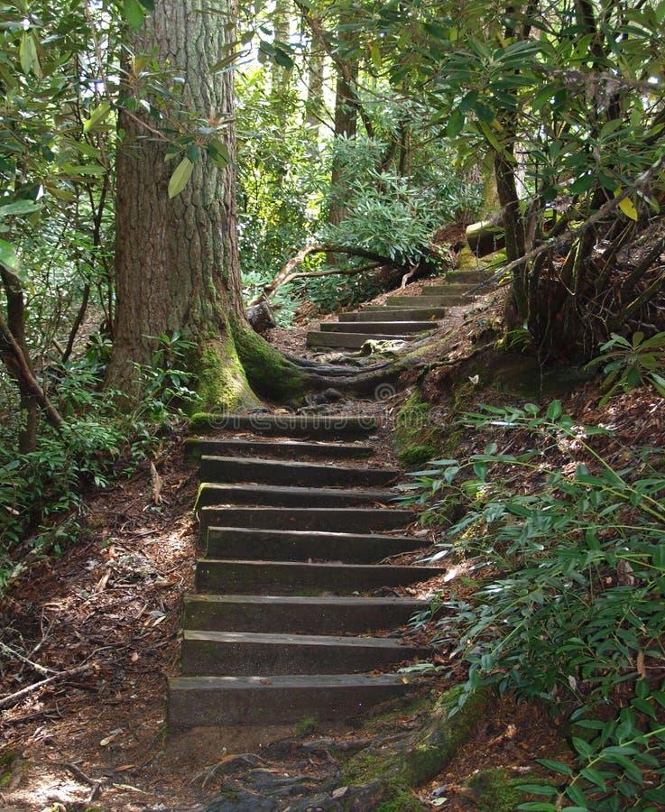 Sentier de randonnée de lac Cliffside photographie stock libre de droits