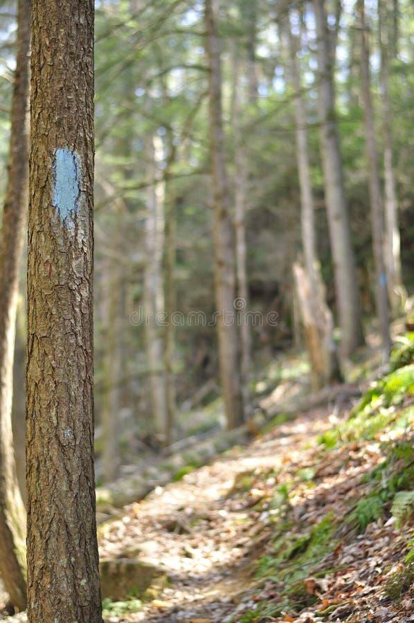 Sentier de randonnée du Connecticut images stock