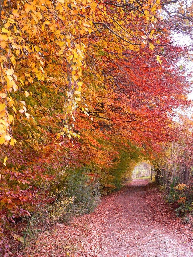 Sentier de randonnée en bois de hêtre coloré automnal image libre de droits