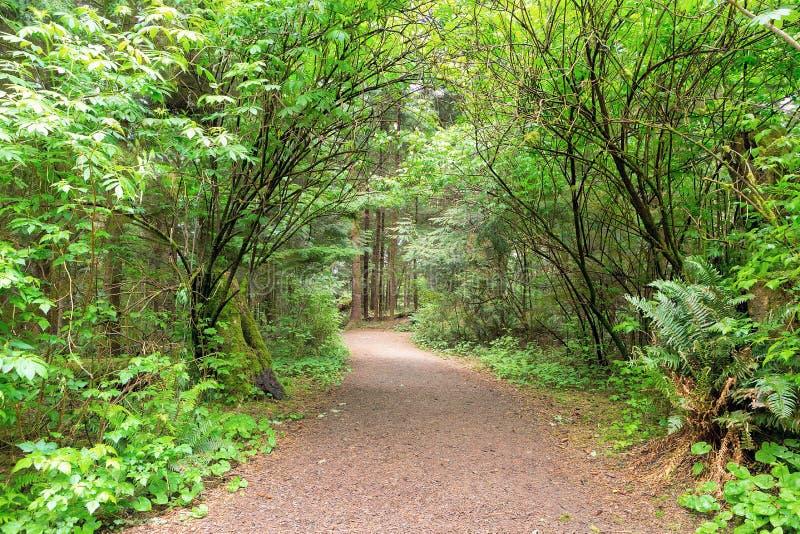 Sentier de randonnée le long de printemps de Lewis et de Clark River photographie stock libre de droits