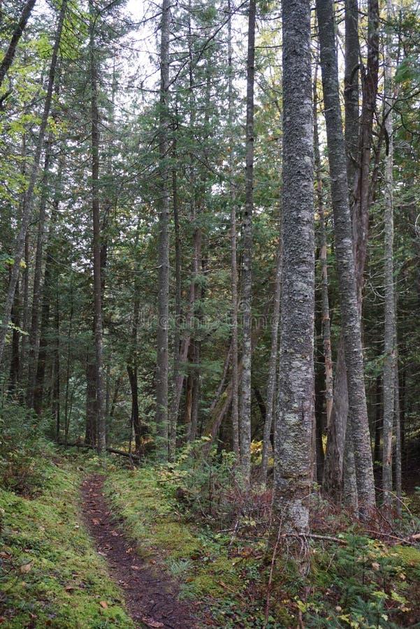 Sentier de randonnée tapissé photo libre de droits