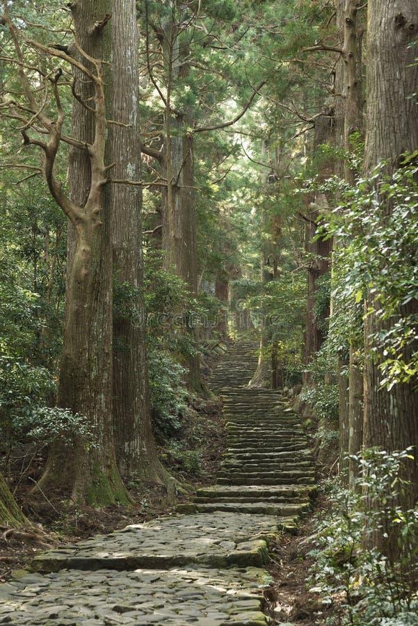 Sentier de randonnée vert dans la forêt au Japon photographie stock