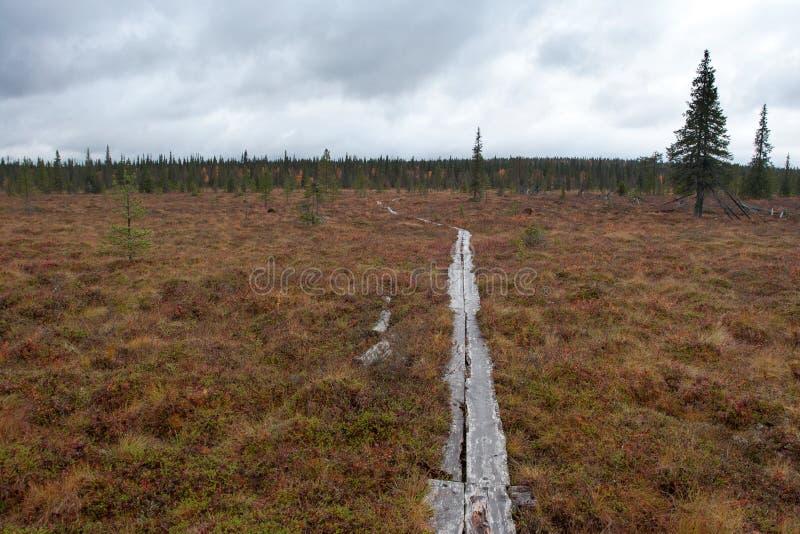 Sentier piéton avec les planches en bois dans Taiga, Finlande photos libres de droits