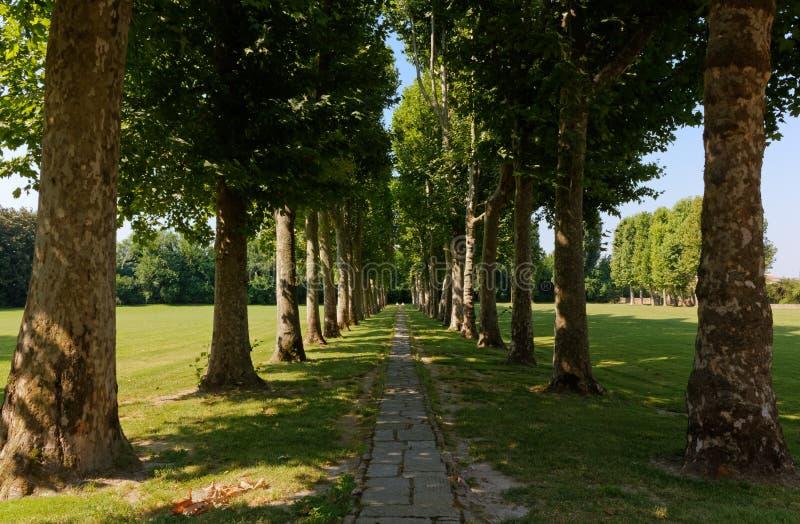 Sentier piéton bordé d'arbres images stock