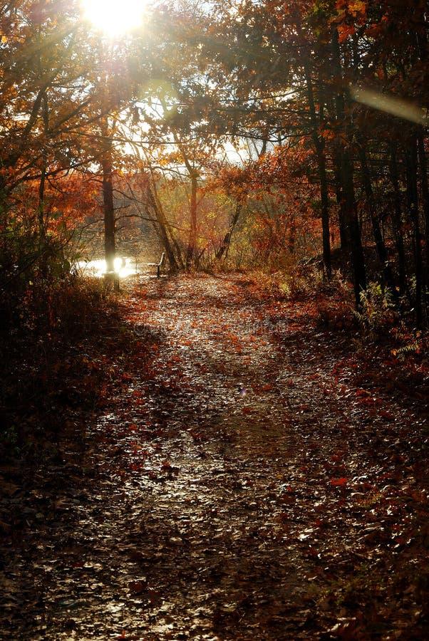Sentier piéton d'automne photo stock