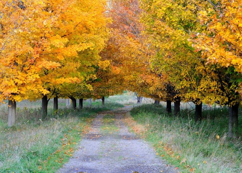 Sentier piéton d'automne photo libre de droits