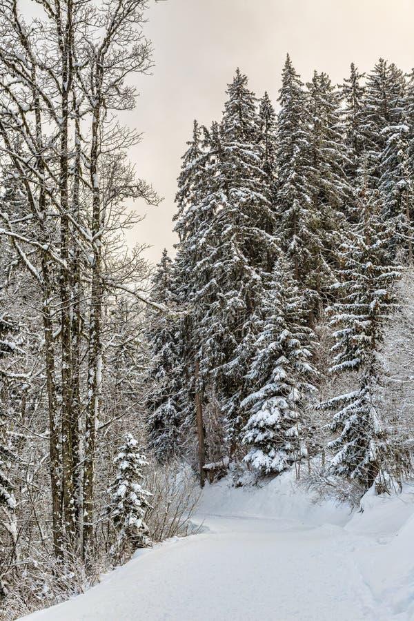 Sentier piéton d'hiver images libres de droits