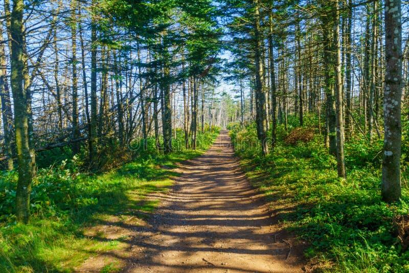Sentier piéton dans Bonaventure Island photos stock