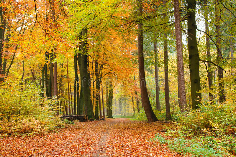Sentier piéton dans la forêt d'automne images libres de droits