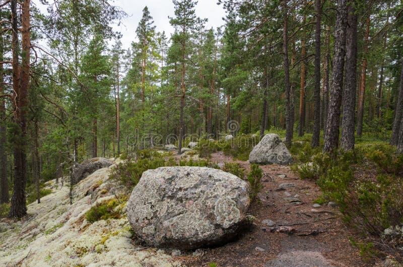Sentier piéton dans la forêt de la Finlande photographie stock