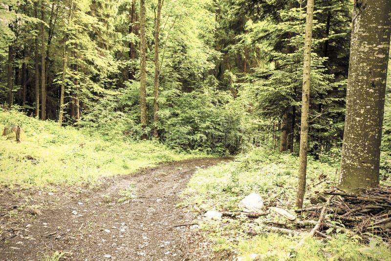 Sentier piéton dans la forêt dense photos stock