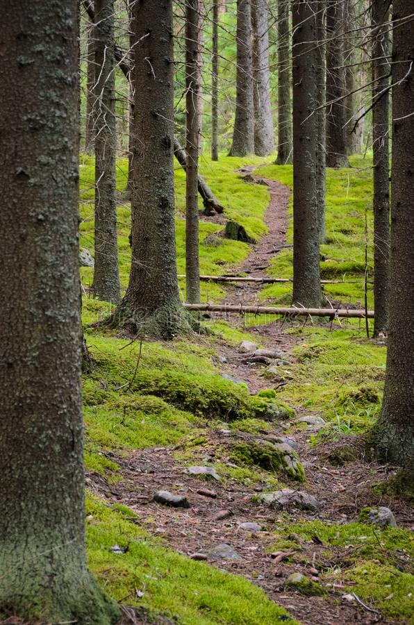 Sentier piéton dans la forêt impeccable photographie stock libre de droits
