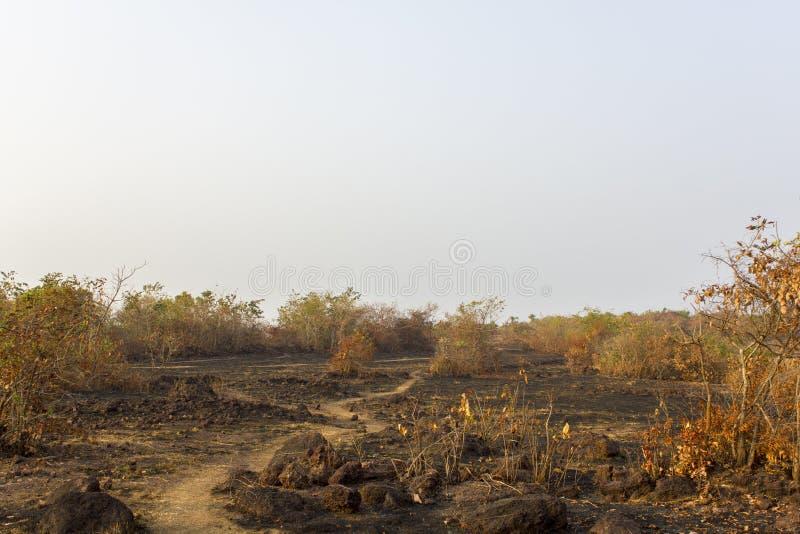 Sentier piéton dans la savane rocheuse sèche avec des buissons sous un ciel gris photographie stock libre de droits