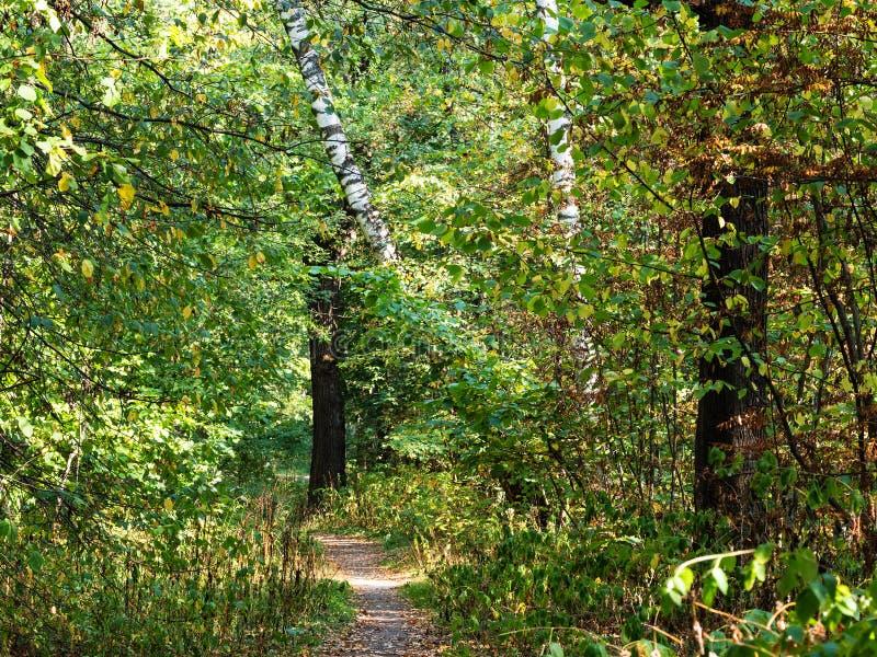 Sentier piéton dans le verger dense de forêt en parc urbain image stock