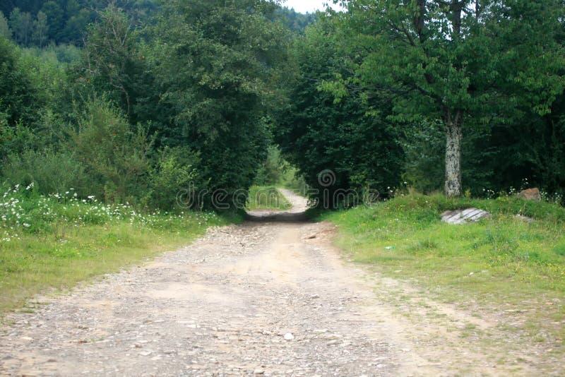 Sentier piéton dans un chemin forestier à feuilles caduques dense et vert photographie stock libre de droits
