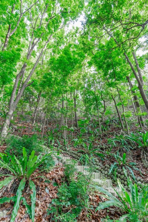 Sentier piéton dans une forêt verte dense photos libres de droits