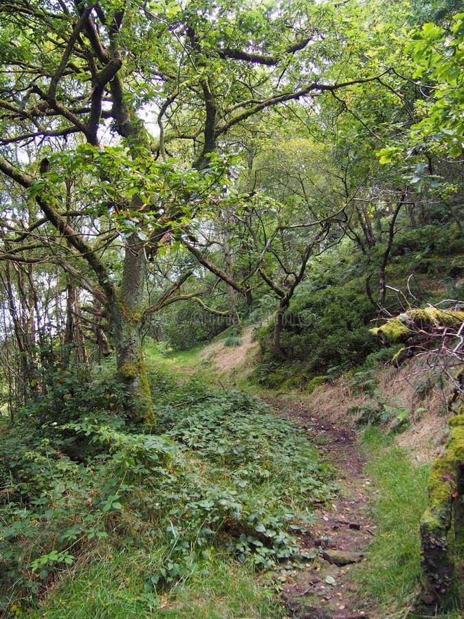 Sentier piéton de enroulement rocheux amenant un flanc de coteau dans la région boisée verte dense avec les feuilles vertes de fi image stock