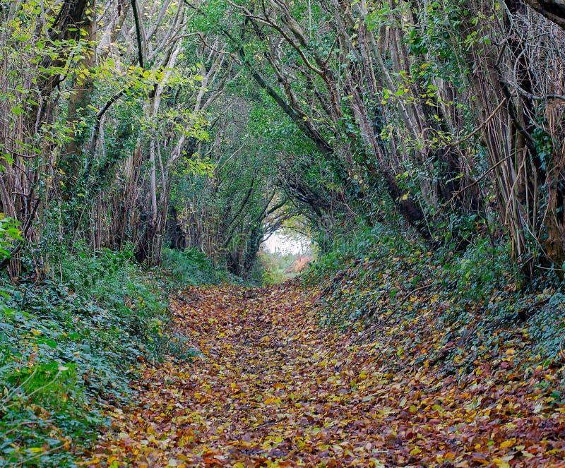 Sentier piéton de région boisée d'automne images libres de droits