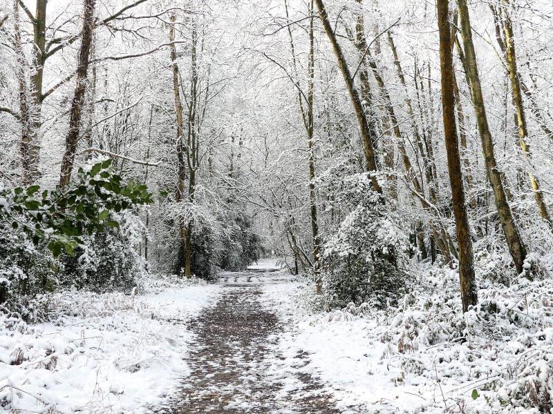 Sentier piéton de région boisée dans la neige d'hiver, terrain communal de Chorleywood, Hertfordshire photos stock
